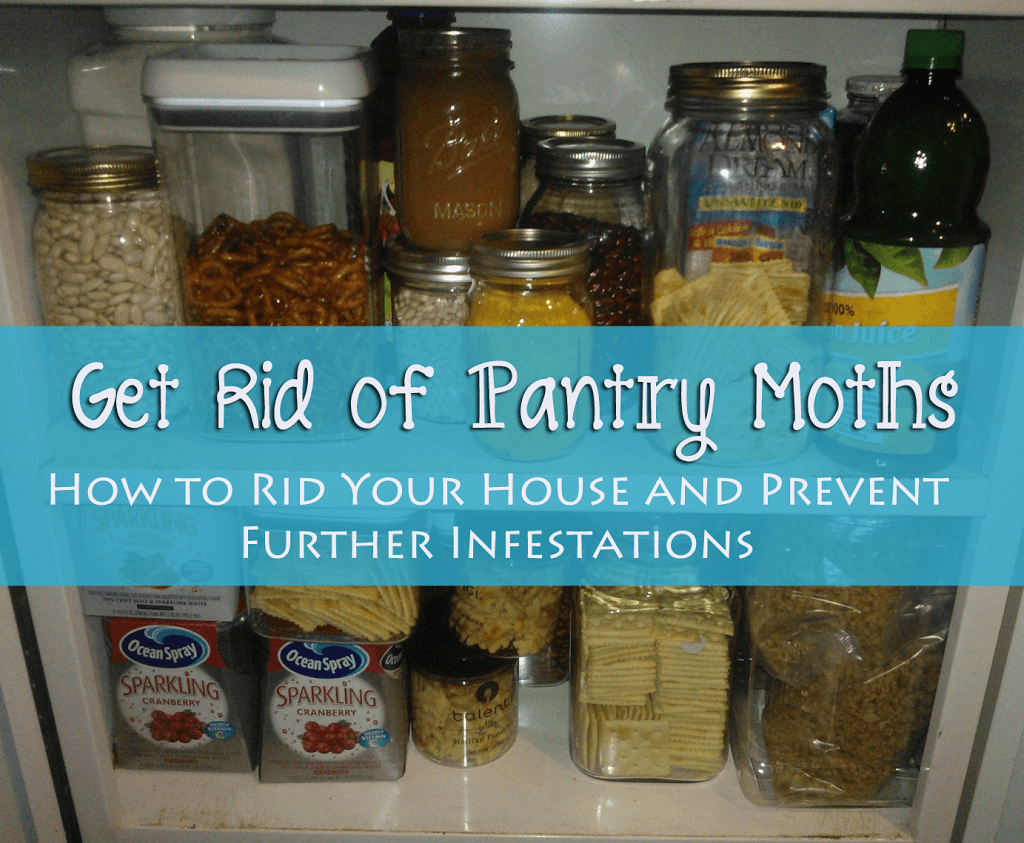 Get Rid Of Pantry Moths The Herbal Spoon