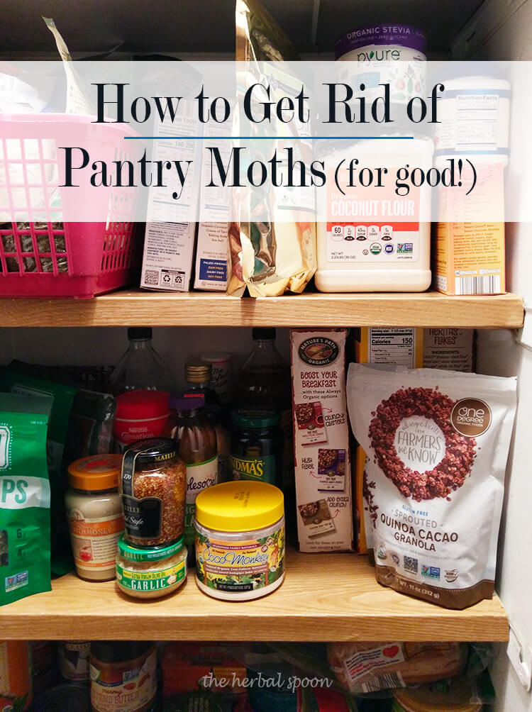 How To Get Rid Of Pantry Moths For Good, How Do I Get Rid Of Moths In My Kitchen Pantry